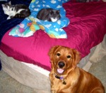 Mikey, Ginger, & Marley